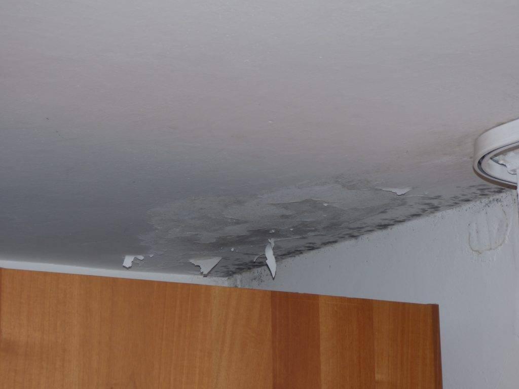 ... da Incubo 13 : Caso studio di due camere da letto infestate da muffa